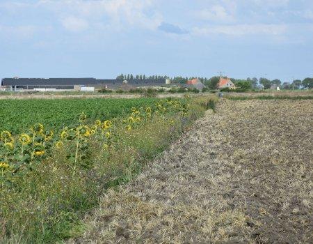 Akkerranden: waar de jacht en de landbouw elkaar vinden