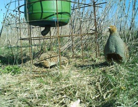 Jagen op kleinwild bij een voederplaats is en blijft geoorloofd