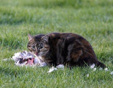 Gedumpte huisdieren: ook voor jagers een plaag