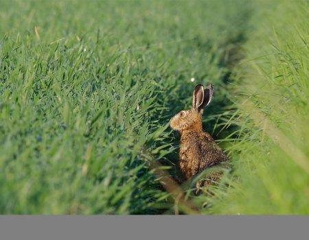 Lezersbrief: 'Natuurverenigingen en jagers: leer van elkaar'