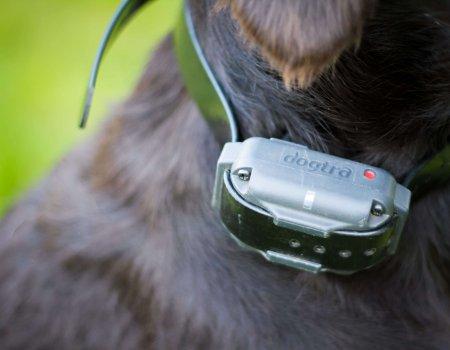 Stroomhalsband is nodig voor de veiligheid van de automobilist en de jachthond