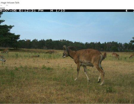 Help online met het detecteren van dieren op wildcamera's
