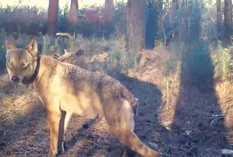 Verdwijning Naya de wolf: 'Geen feiten, alleen kwalijke roddels'