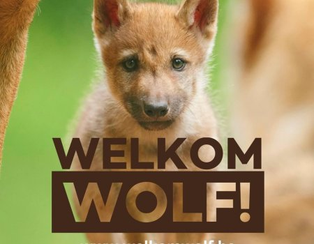 Boodschap aan Jan Loos (Welkom Wolf): 'Hou het beschaafd'