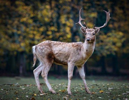'Jagers hobbyisten? Eerder: ecologisten'