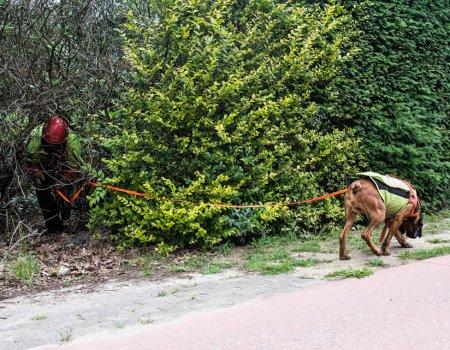 Het Nazoekteam speurt mee naar aangereden wolf