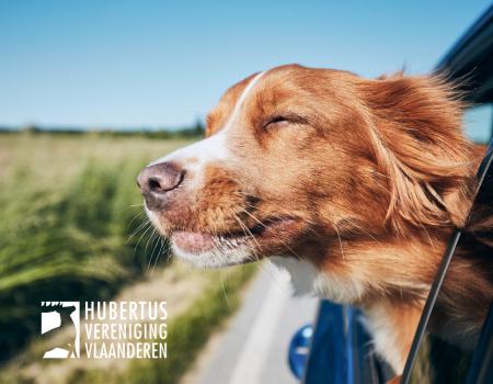 Wetgeving: hoe vervoer ik mijn hond?