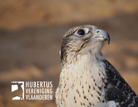 Impact vogelgriep op jachtwild: 4 vragen
