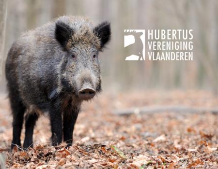 Jachtreizen: Afrikaanse varkenspest in het buitenland
