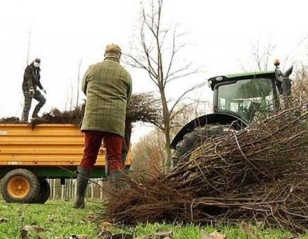 Doe mee: Limburgse haagplantactie uitgebreid naar heel Vlaanderen