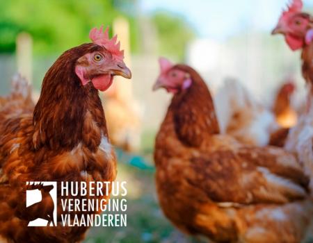 Geen vogelgriep meer in België, bevestigt FAVV