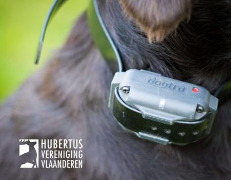 Verbod stroomhalsband: 'Verhoogd risico op aanrijdingen met jachthond'